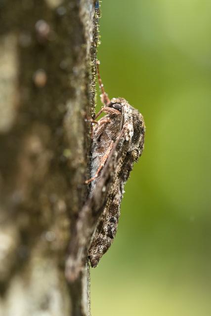 wildlife in Agumbe rainforest Karnataka India