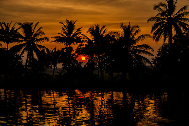 reddish sunset behind coconut trees beside backwaters of Alappuzha Kerala India