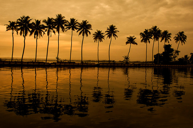 reflection of golden sky and coconut trees on the backwaters Alappuzha Kerala India