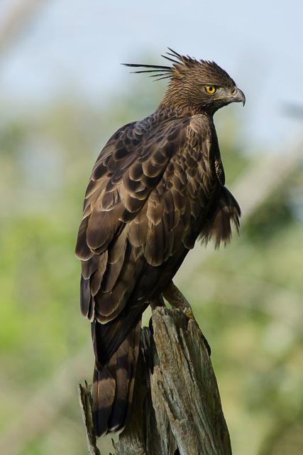 birding at Bandipur National park Karnataka India