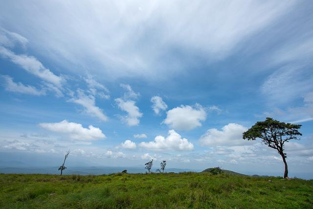 clear blue sky view in Bandipur National Park Karnataka India