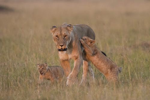 North Kenya and The Great Rift Safari tour