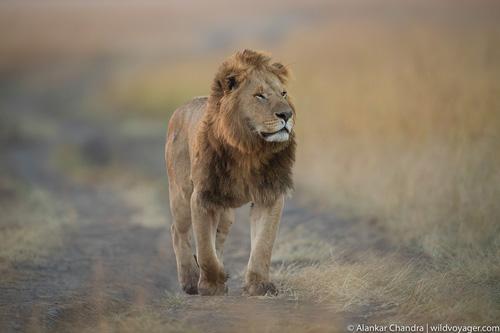 Serengeti and Ngorongoro tour