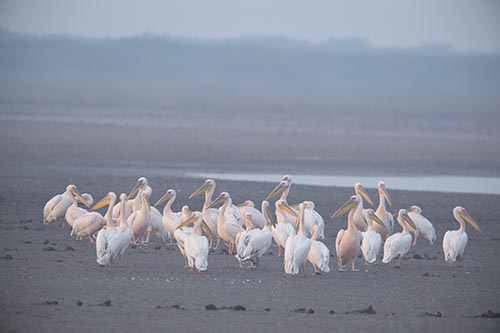 Jamnagar Birding tour