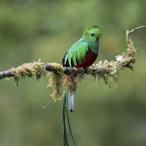 Costa Rica Classic Birding tour