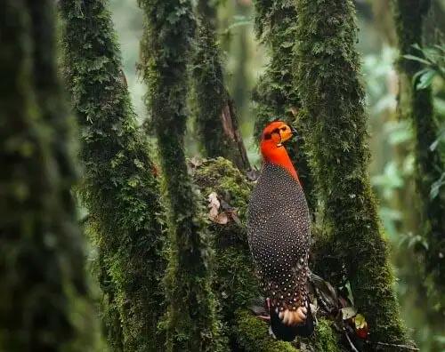 Eaglenest Wildlife Sanctuary tour