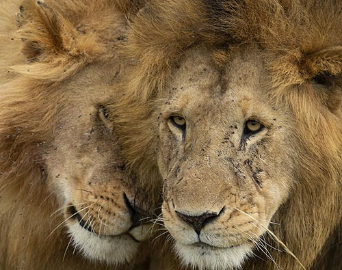 Masai Mara National Reserve tour