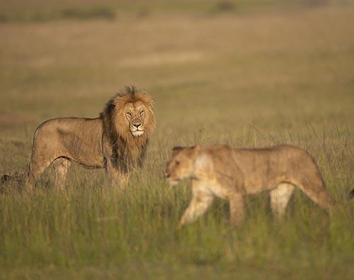 Manyara, Serengeti, Ngorongoro tour