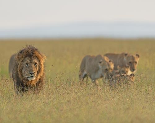 Mara, Serengeti, Ngorongoro tour