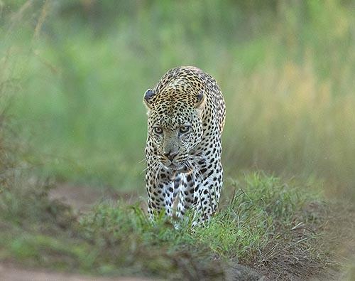 Kenya Big Five Safari tour