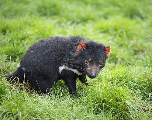 tasmania wildlife tours