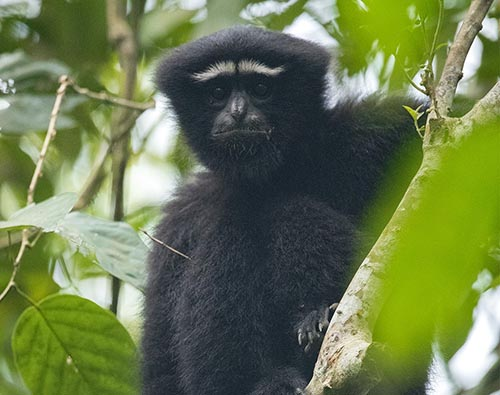 Hoollongapar Gibbon Wildlife Sanctuary tour