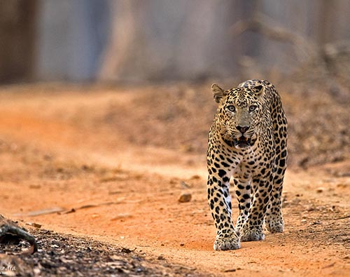 Kabini Nagarhole National Park tour