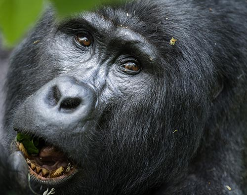 Bwindi Impenetrable National Park  tour