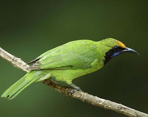 Thattekad Bird Sanctuary tour
