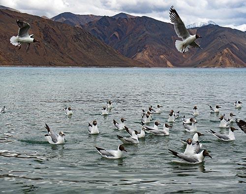 Ladakh Birding and Wildlife tour