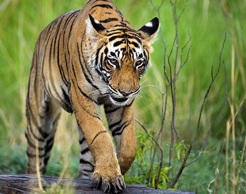 North India Winter Wildlife tour