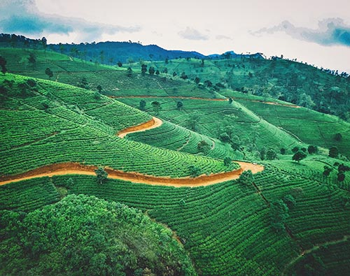 Sri Lanka Scenic Tour tour