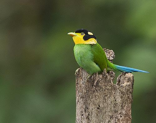 Sikkim & West Bengal Birding tour