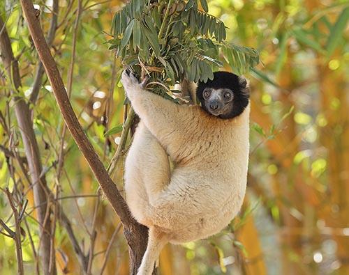 Ranomafana National Park tour