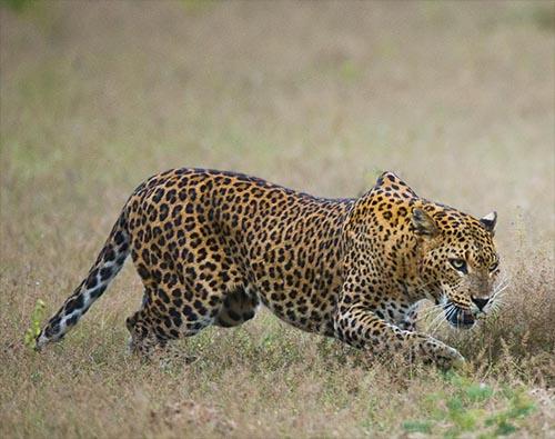 Highlights of Sri Lankan Wildlife tour