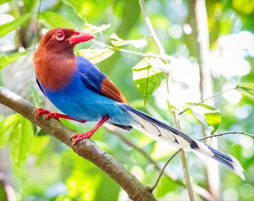Bird Watching in Sri Lanka tour