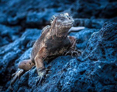 Galapagos Wildlife Tour tour