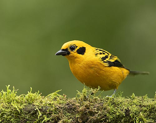 Ecuador Bird Photography Tour tour