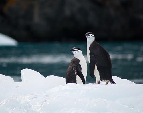 Antarctica, Chilean Fjords & Falklands tour