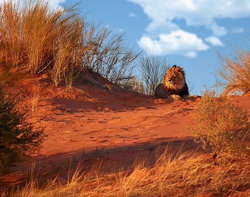 Central Kalahari Game Reserve tour
