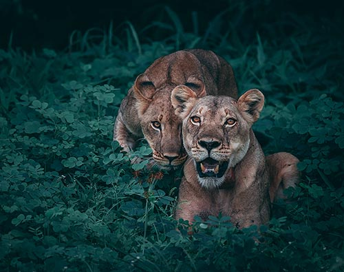 Chobe National Park tour