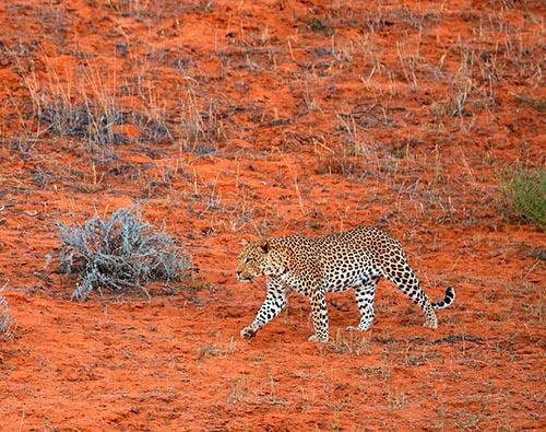 Kalahari and Okavango tour