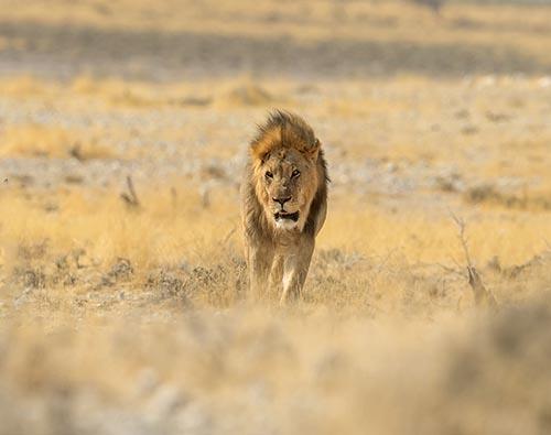 Etosha National Park tour