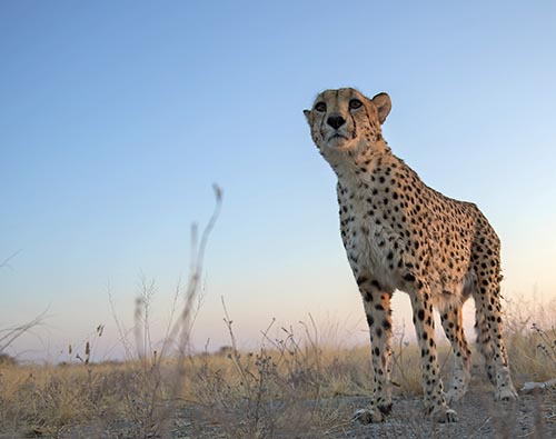 Discovery of Namibia tour