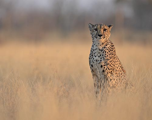 Classic Kruger Park safari tour