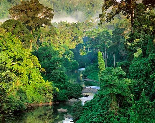 Sinharaja Forest Reserve tour