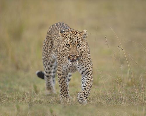 Best of Kenyan Wildlife tour
