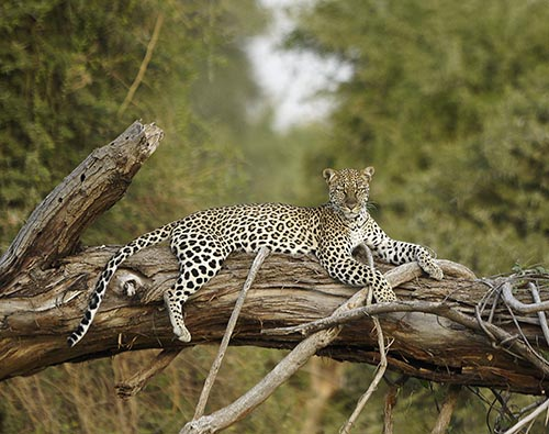 Samburu National Reserve Kenya tour