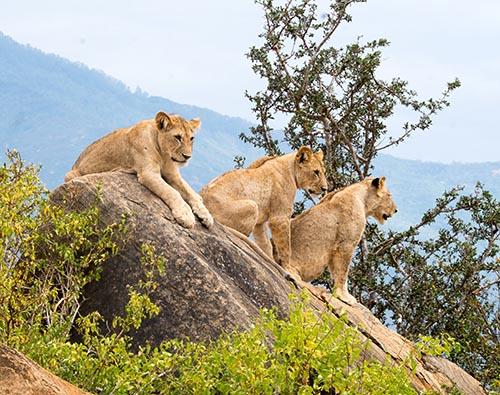 Tsavo National Park tour
