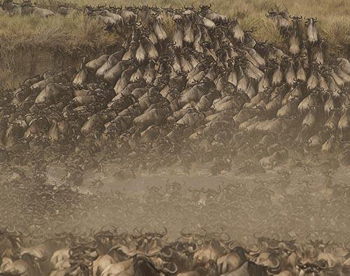 Masai Mara migration experience  tour