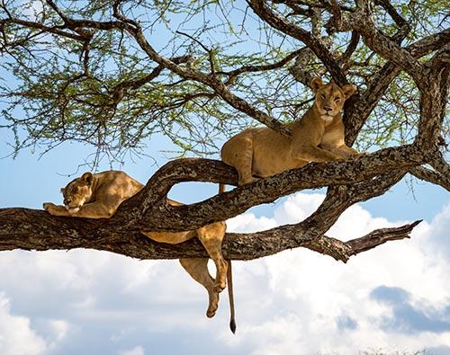 Lake Manyara National Park tour