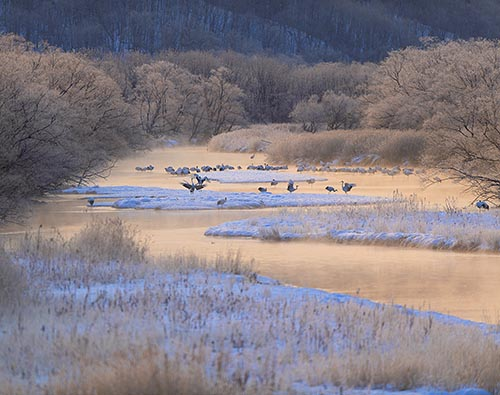Hokkaido winter wildlife tours