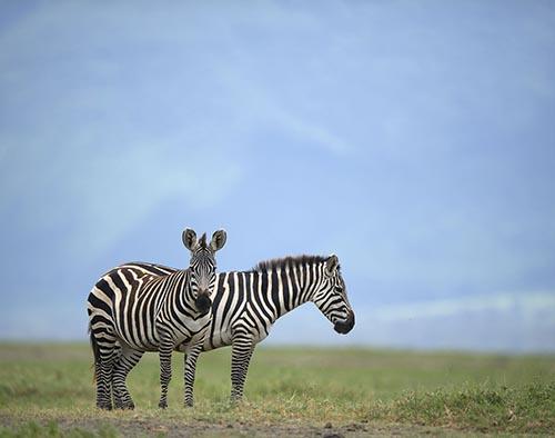 Ngorongoro Conservation Area tour